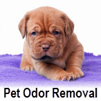 Pet Odor Removal Service
