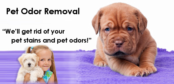 Pet Stains & Pet Odor Removal