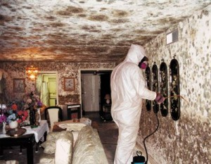 Mold Appearance After Basement Flooding
