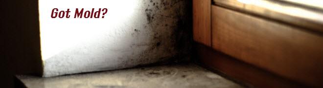 mold removal nj, ny
