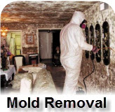 Mold Remediation NJ