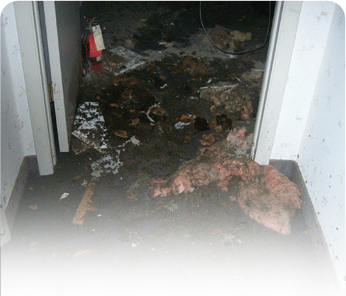 Sewer backup cleanup Croxton