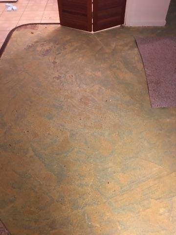 Wet Carpet Removal