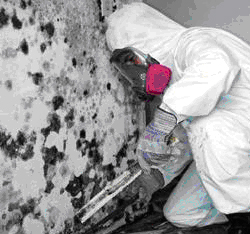 Mold on Interior Walls - Mold Removal Walls