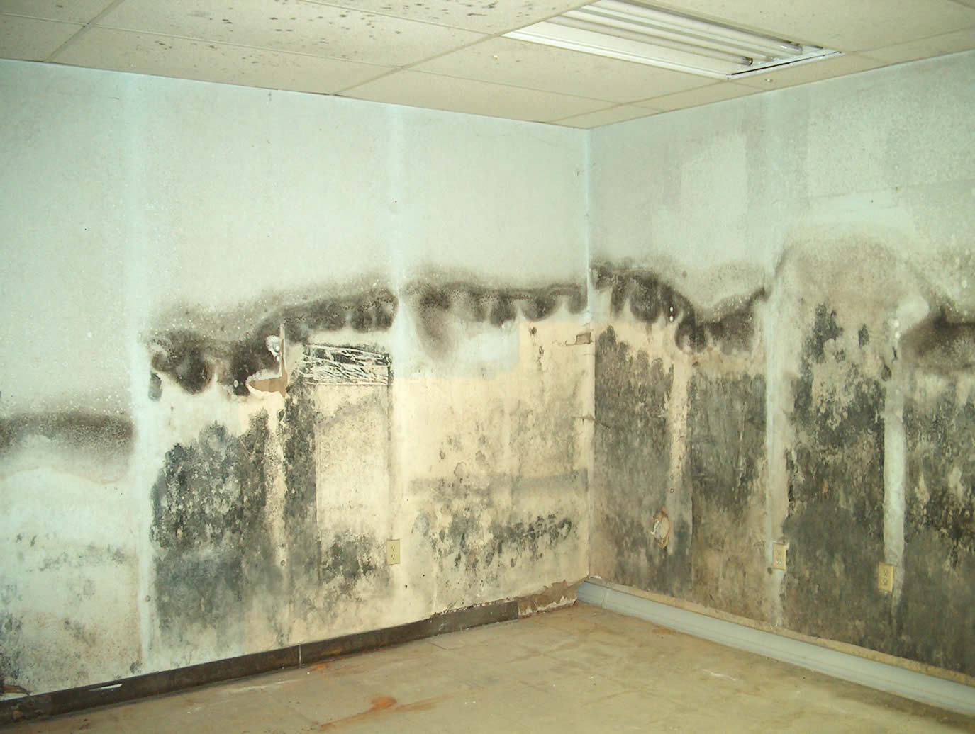 Basement Mold and moisture problems