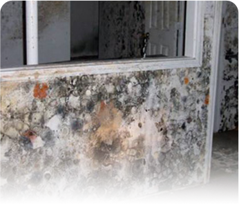 High humidity in basement and crawl space cause mold damage