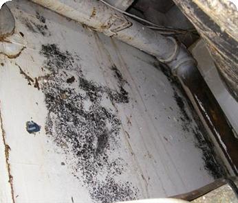 Basidiospores Mold Removal