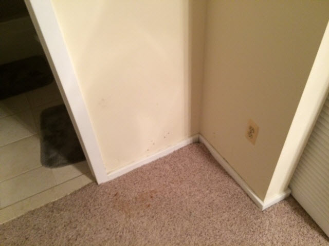 Carpet mold removal