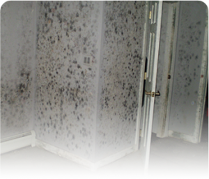 High humidity in basement cause mold damage