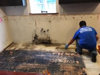 Wet Hardwood Floor Mold
