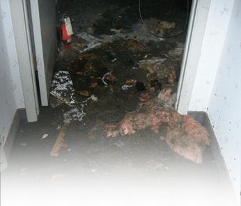 Sewage backup cleanup Whippany