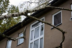 Water damage due to a tree falling in Holmdel
