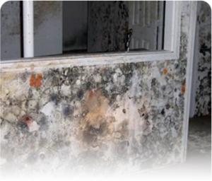 Aspergillus and Penicillium mold removal