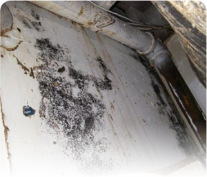 Crawl Space and Basement Mold
