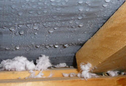 Attic Condensation Mold Cleanup NJ