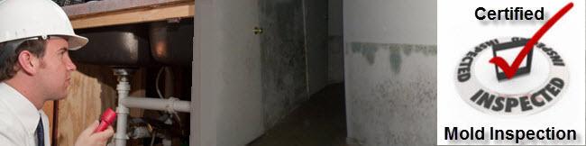 basement mold inspection NJ Ny