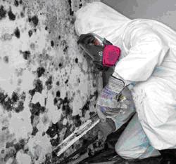 Mold on Interior Walls - Mold Removal Walls